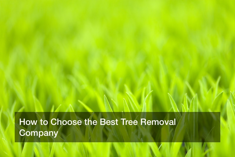 How to Choose the Best Tree Removal Company